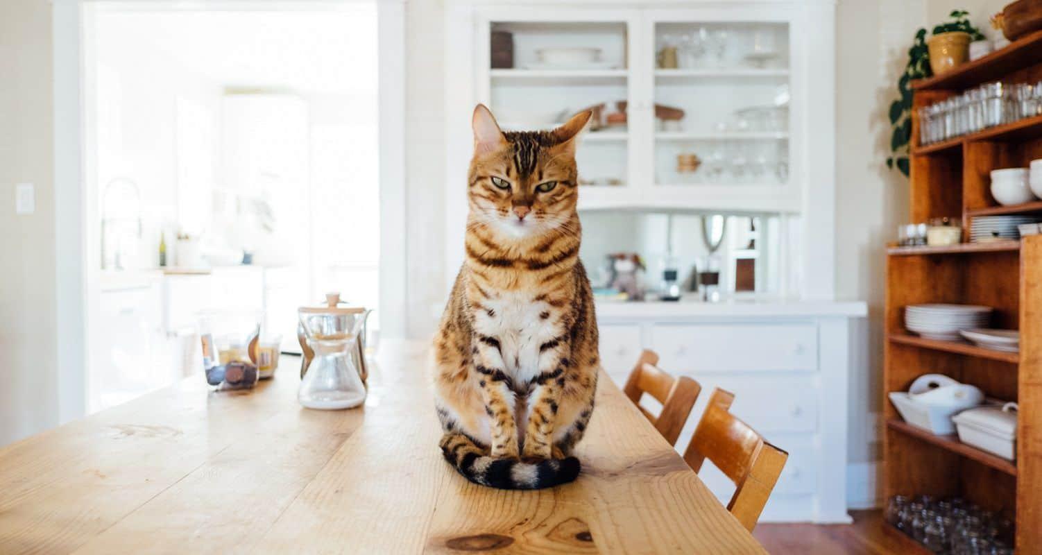 importare accessori per animali